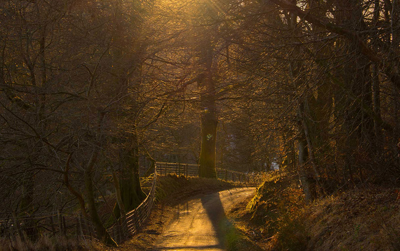 narrow road winding through trees with the sun behind