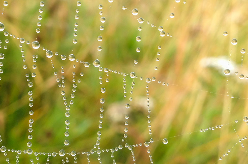 part of a spiders web covered in morning dew